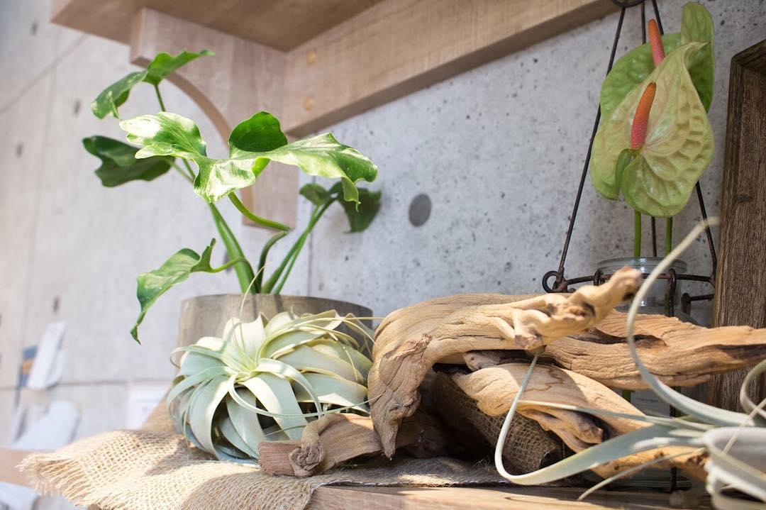 店内のお花を新しくして頂きました(2017.09.23)